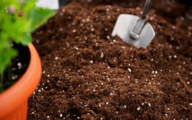 Terriccio universale per vasi e aiuole prezzi e offerte online - Terriccio da giardino prezzo ...
