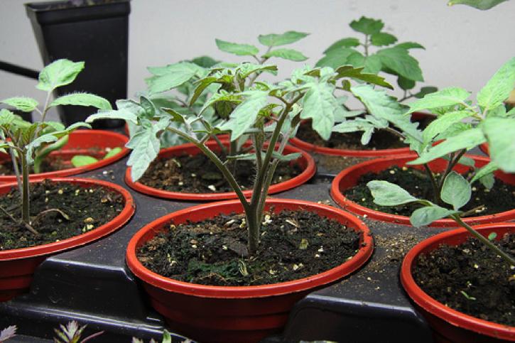 Terriccio da semina prezzi e offerte online for Piantine orto prezzi