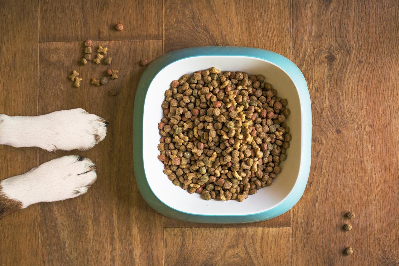 Miglior cibo per cani