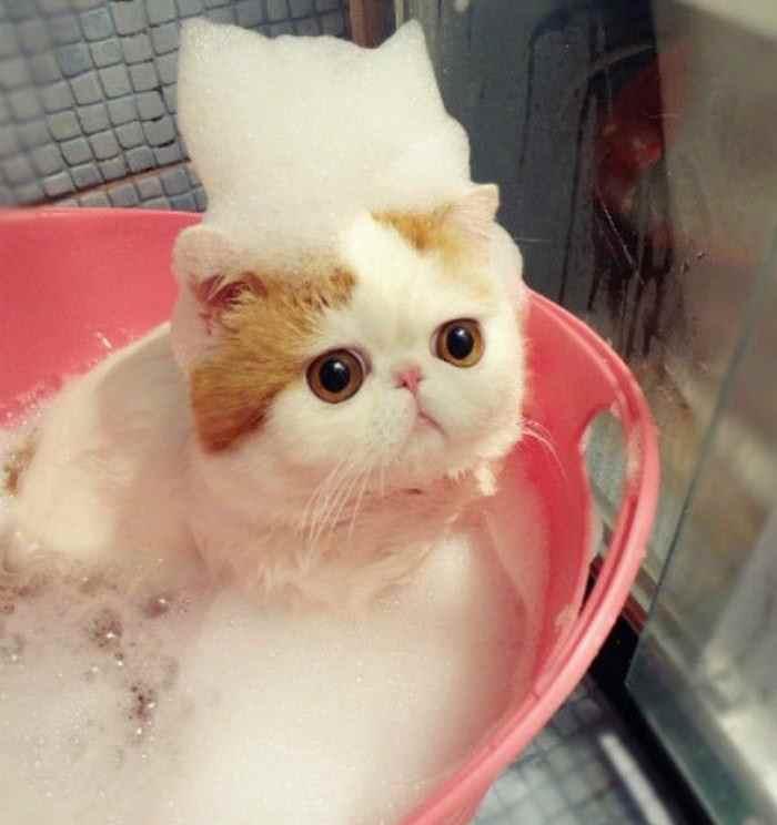 Gattino che fa il Bagnetto