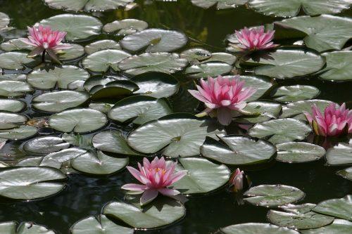 Teli per laghetti da giardino for Vasche preformate per laghetto